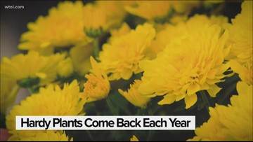 Tips for changing out your summer pots for the fall season