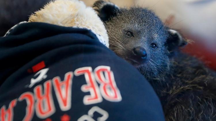 Cincinnati's new bearcat mascot needs a name