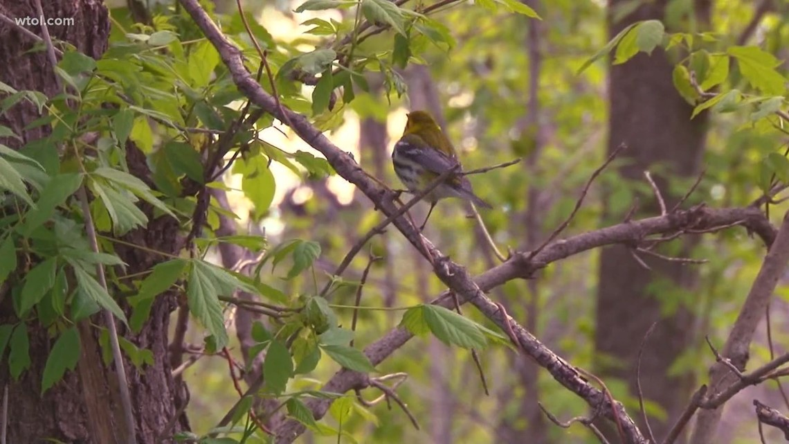 Ohio's birding week events moving online this year