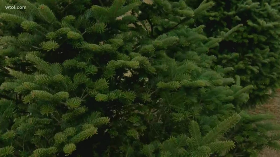 How do you pick the best real Christmas tree?