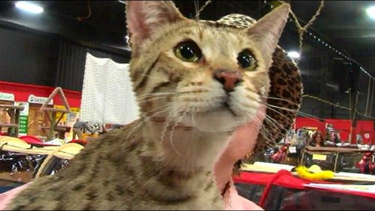 Rec Center is the place to be for cat lovers this weekend