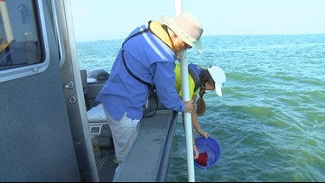 Local groups test Lake Erie water for annual HABs grab