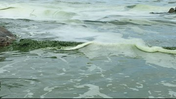 Judge allows lawsuit seeking action on Lake Erie algae
