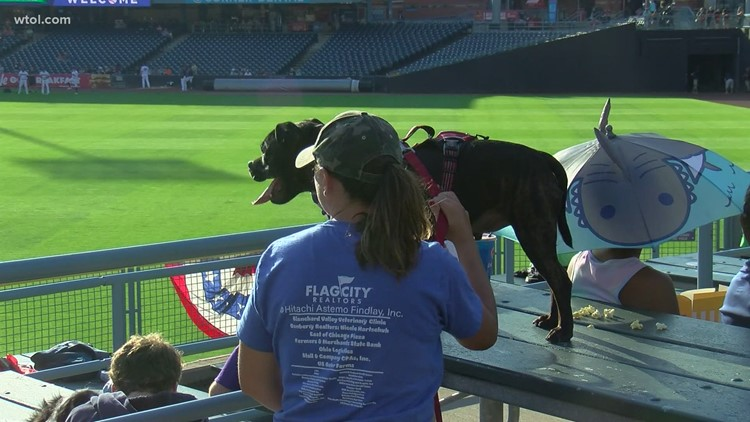 A walk in the ballpark: Hens and Hounds event a home run for dogs and owners