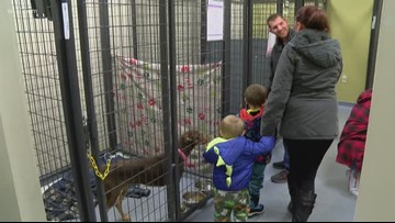 Kids to learn humane animal treatment with after-school program