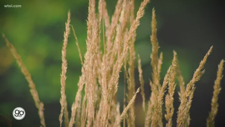 Get your yard fall-ready with ornamental grasses