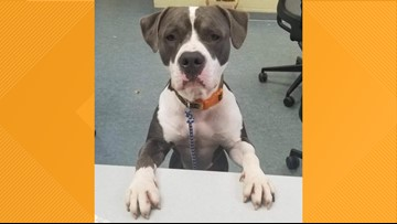 Sunday is last day to adopt a dog for $5 from Lucas County Canine Care and Control