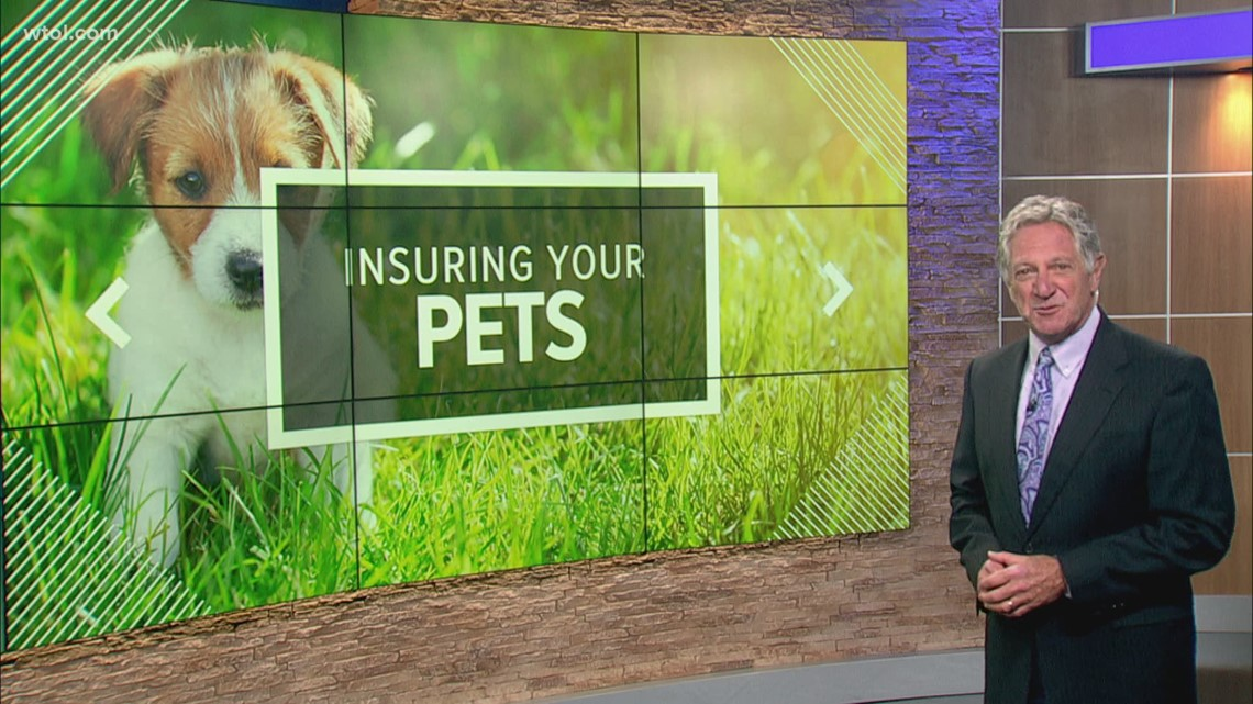 Pet Insurance and how it works | Stretching Your Dollar