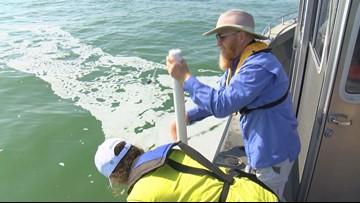 UT students take part in major group study of Lake Erie algal bloom