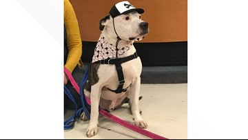 Lucas County Canine Care & Control is packed with pooches and is running a special to make room
