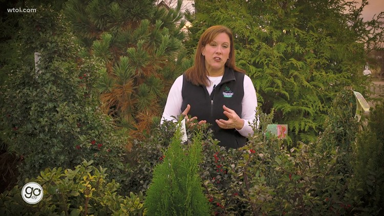 Sprucing up your porch with plants suited for the winter | Go 419: Nature's Corner