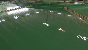 Call 11 for Action: University researcher to study Adrian water for toxins; city combating odor, taste issues