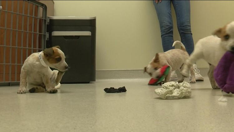 Toledo Humane Society receives donation to aid in homing shelter animals