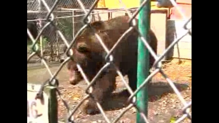 Activists call for changes in Ohio exotic animal ownership laws