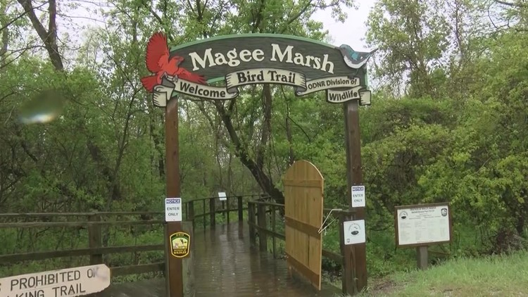 Positive outlook for the recovery of storm-damaged Magee Marsh Wildlife Area