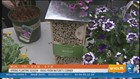 Spring planting ideas from Nature's Corner