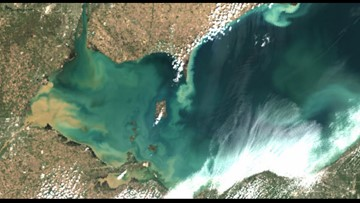Algae on Lake Erie is forecast to reach a severity of 7.5 this summer - this is a top 5 harmful bloom forecast