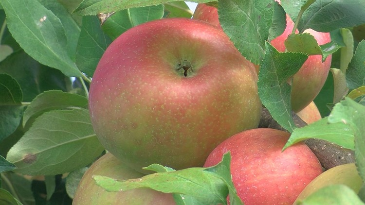 Erie Orchards & Cider Mill ready for fall season