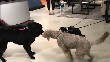 WHO'S A GOOD DOG? (AND HUMAN, TOO) - Follow these tips for a successful Take Your Dog to Work Day