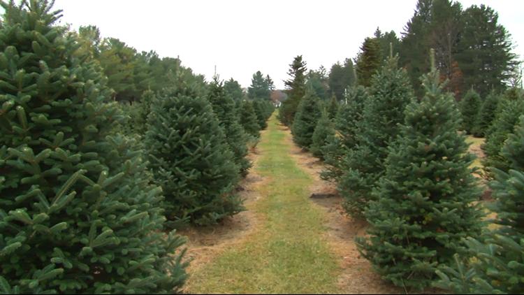 Whitehouse Christmas.Trading Turkeys For Trees Whitehouse Christmas Tree Farm