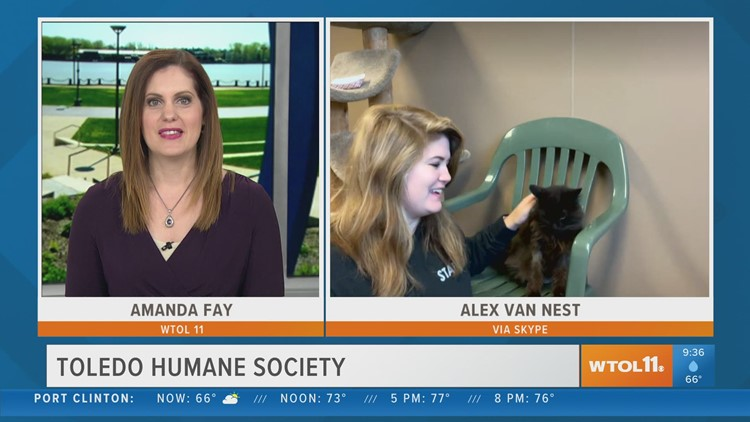 Online adoptions available at Toledo Humane Society