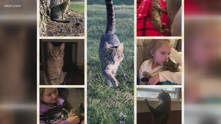 9 year old publishes a book about the adventures of her lost cat