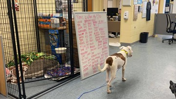 83 dogs find love during LC4 Valentine's Day special