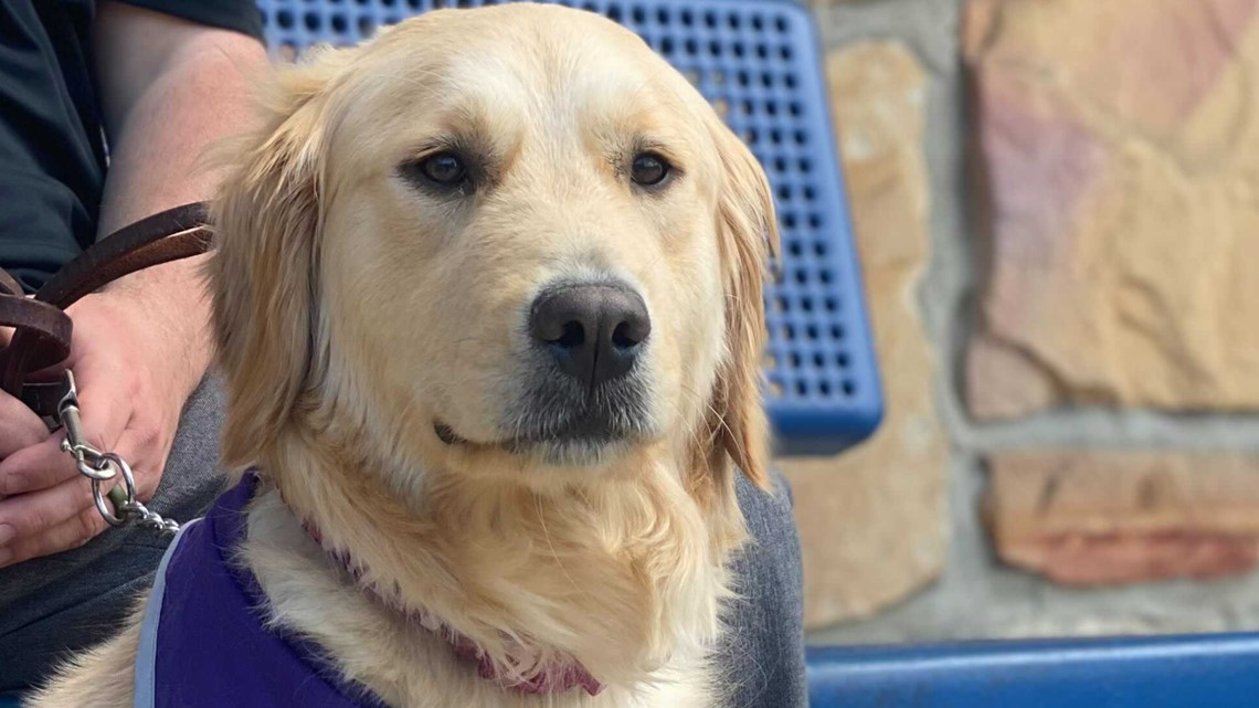 Four-legged faculty member: Biscuit the therapy dog will roam the halls of Whiteford Elementary next fall