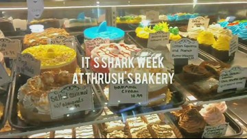 Maumee bakery celebrates 'Shark Week' with delicious deals