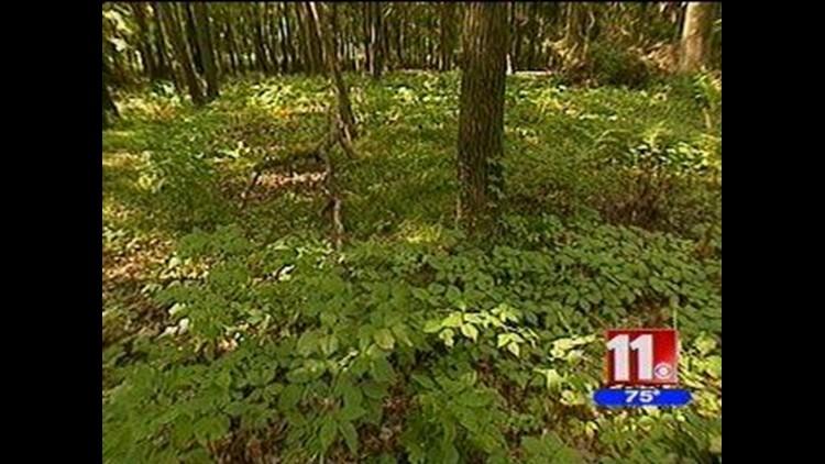 EcoTrack 11: Native gardens bring wildlife