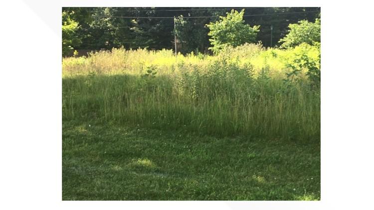 High grass at Wildwood Metropark