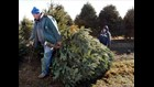Whitehouse Tree Farm selling trees for final two days ...