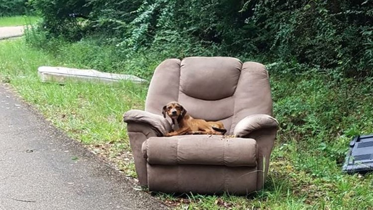 Starving abandoned puppy refused to leave master's armchair