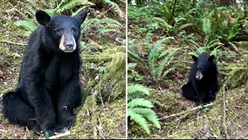 Black bear shot and killed after becoming too friendly with humans