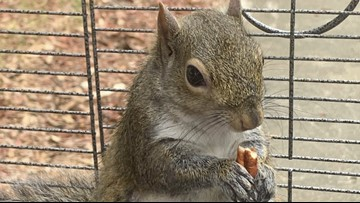 Authorities: Alabama man fed meth to caged 'attack squirrel'