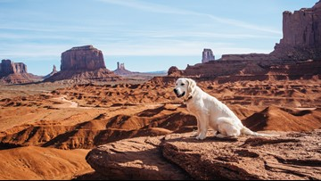 Globe-trotting dog explores 50 states in 50 weeks