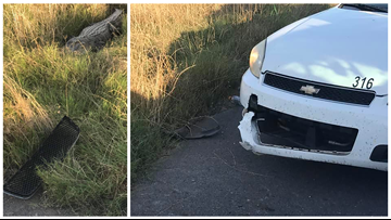 Deputies: Alligator bit off piece of patrol car in Louisiana