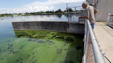 Is your pet at risk from toxic algae blooms when swimming?