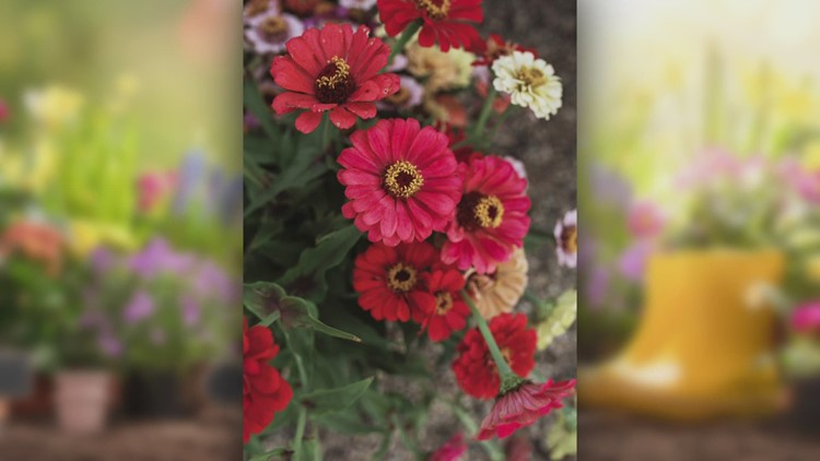 Spring Gardening: What to plant now for gorgeous cut flowers later